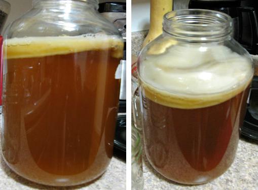 Чайный гриб как приготовить на 3 л банку